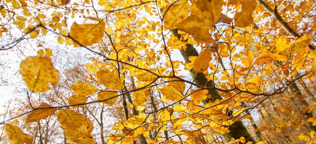 Feuilles, automne photo
