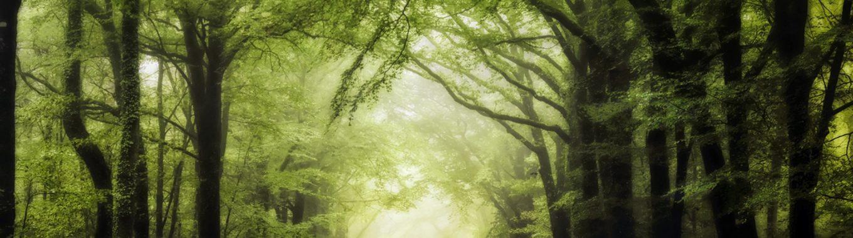 Forêt Brocéliande @Philippe Manguin