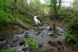 Brocéliande - le Val sans Retour et l'Arbre d'Or