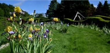 iris jardins de Brocéliande