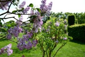 Lilas, les Jardins de Brocéliande