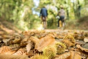 La voie verte parcourue par les vélos électriques, automne - Crédit Emmanuel Berthier