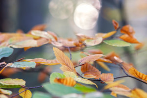 ambiance-d'automne