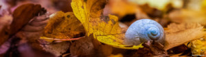 escargot automne forêt
