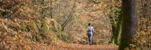 Forêt automne, crtb-Emmanuel BERTHIER