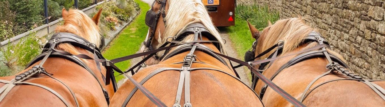 balade calèche, chevaux, brocéliande