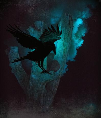 Corbeau dans la nuit - semaine de la Samain 2018 - CIA