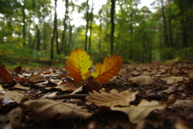 automne, brocéliande forêt