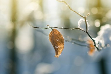 hiver en forêt
