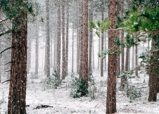 bois hiver
