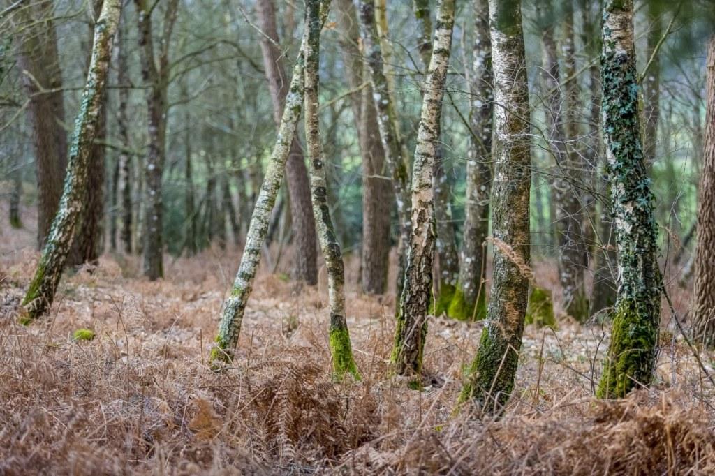Forêt de Brocéliande en hiver. Photo CRTB, Yannick Derennes