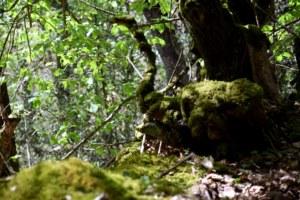 forêt domaniale de Paimpont, Brocéliande