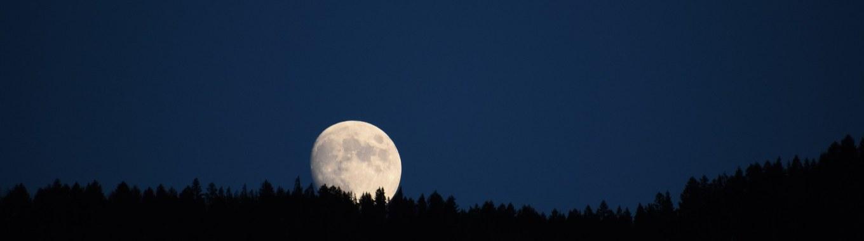 lune, forêt, nuit