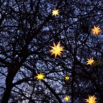 étoiles arbre