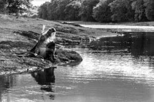 Le chant de l'eau contes imaginaire Comper