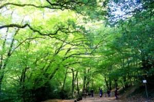 Entrée val sans retour, forêt de Brocéliande