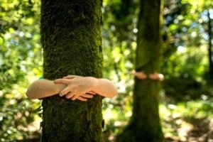 forêt, nature, enfants