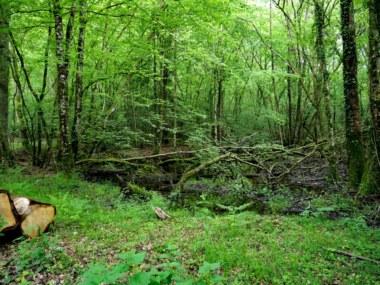 randonnée une forêt des hommes