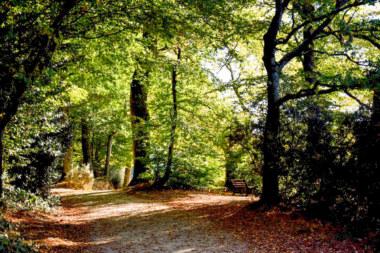 forêt Paimpont étang